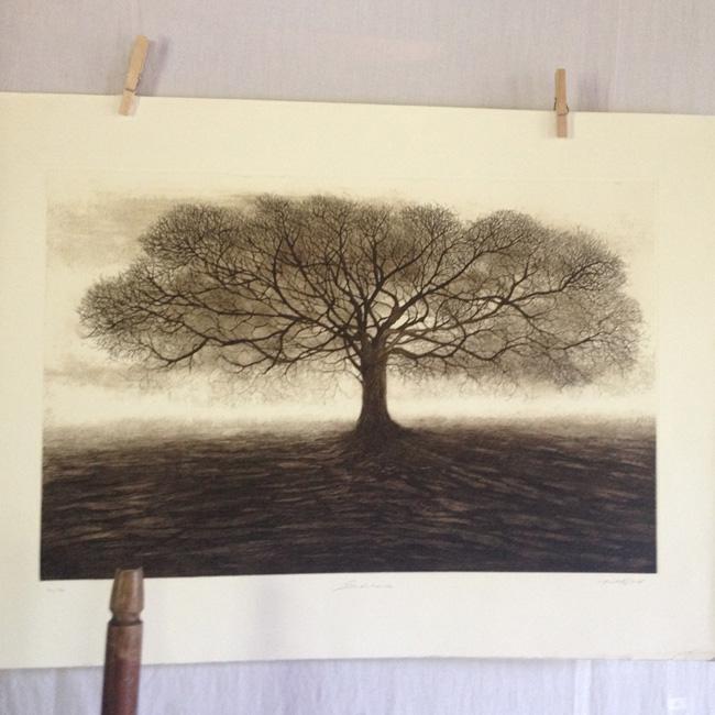 gravure-arbre